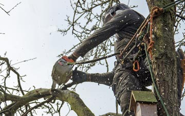the process of removing dead wood from Hampton Hill trees